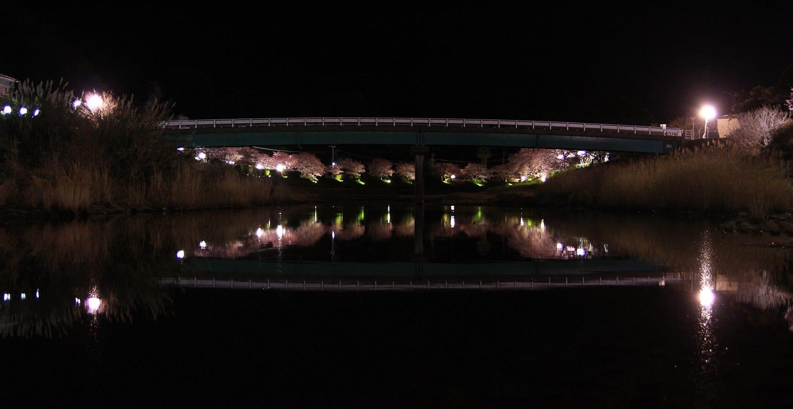 Ngắm Kawazu-zakura và trời sao tại Miurakaigan, Kanazawa-ken 8