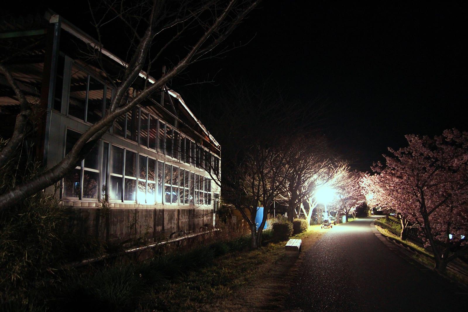 Ngắm Kawazu-zakura và trời sao tại Miurakaigan, Kanazawa-ken 10