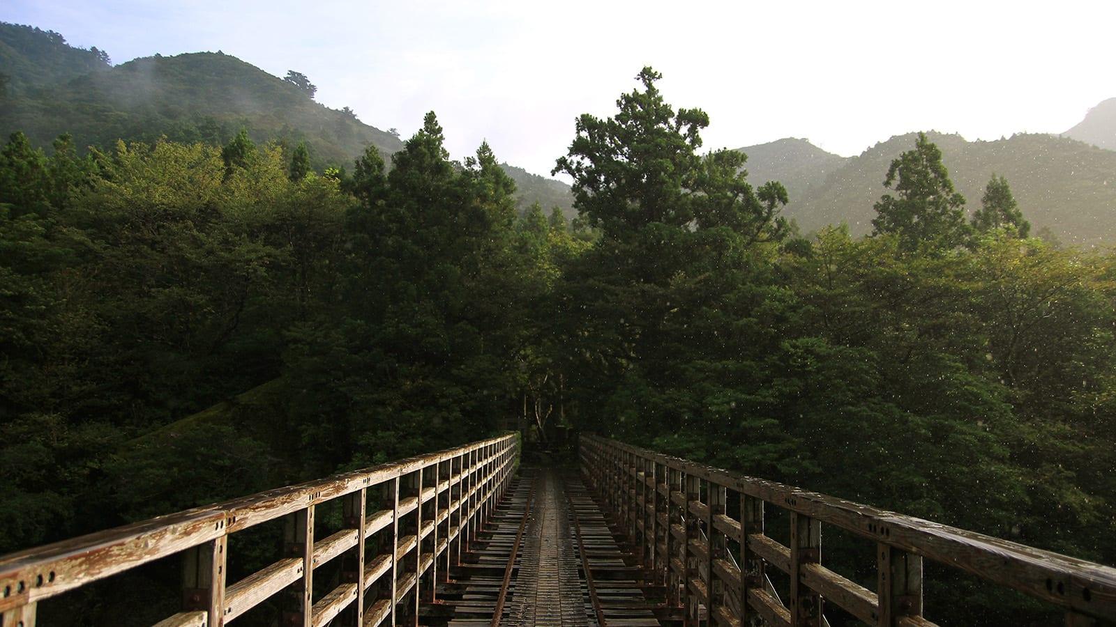 Yakushima – Vùng đất thánh của Mononoke Hime 7