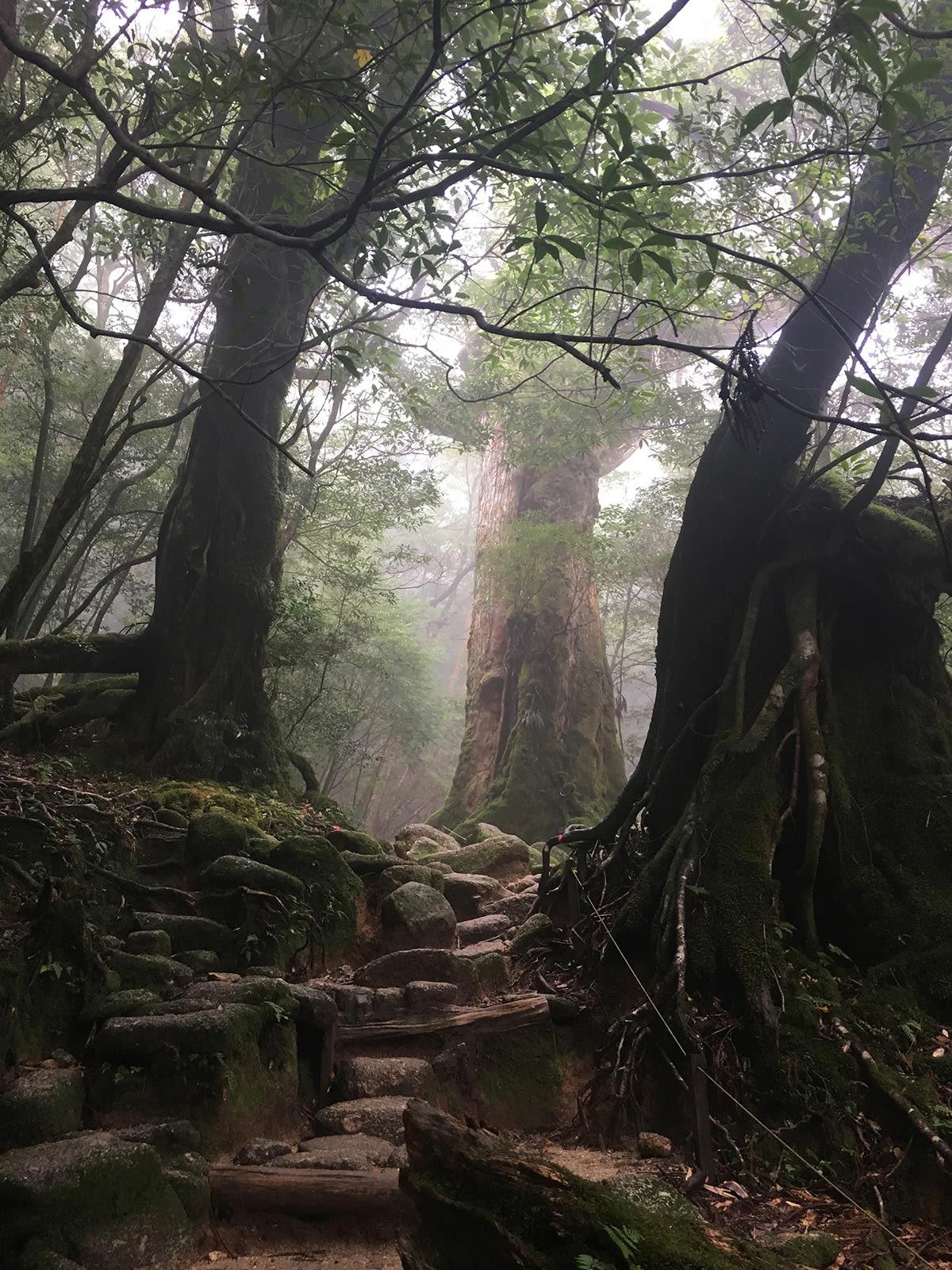 Yakushima – Vùng đất thánh của Mononoke Hime 16