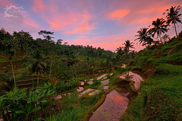 tegalang rice paddies ubud sunset