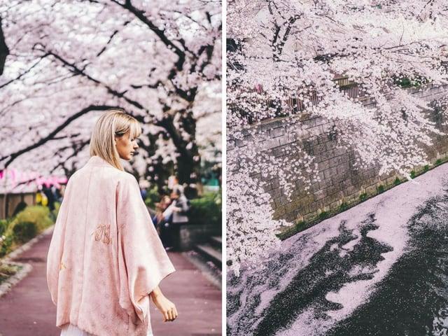 Fleur de cerisier Meguro