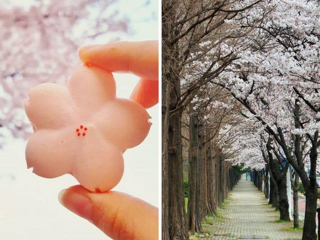 Festival des fleurs de cerisier de Jinhae