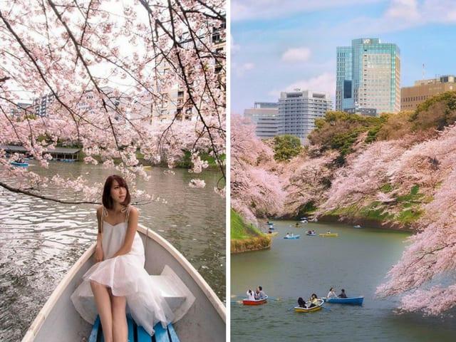 Fleur de cerisier du parc Chidoriga-Fuchi