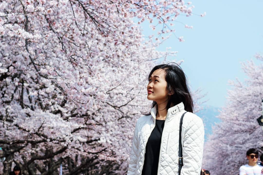 Korea Jinhae Festival Instagram