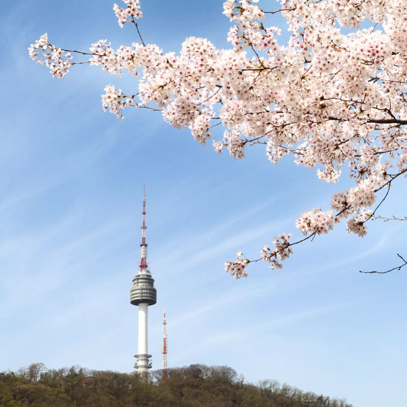 n Seoul Cherry Blososm Tower