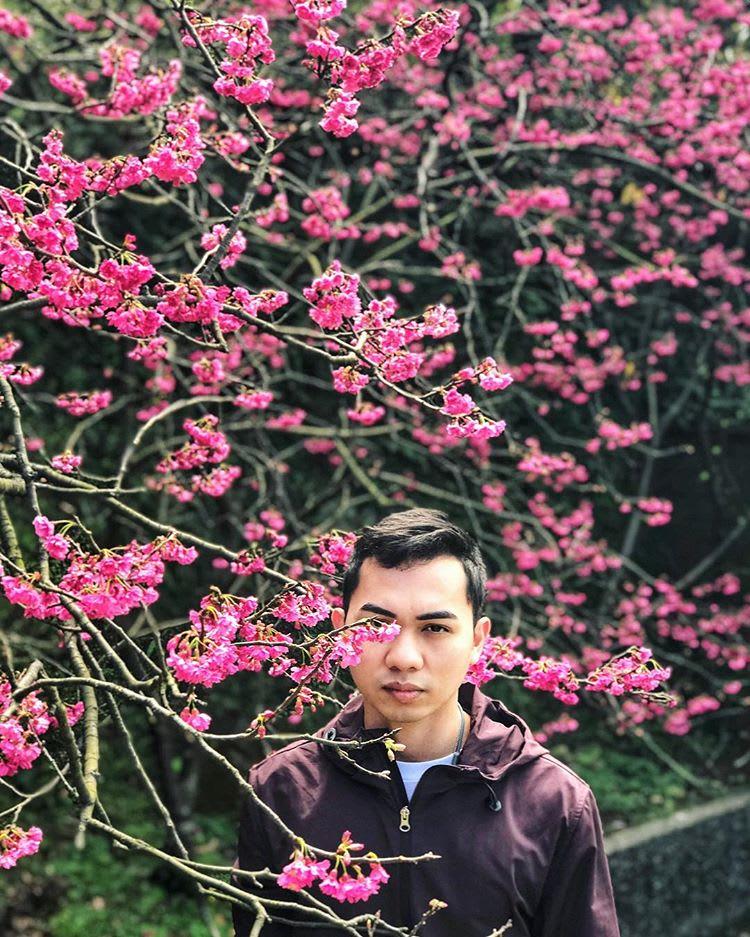 Fleur de cerisier Yang Ming Shan