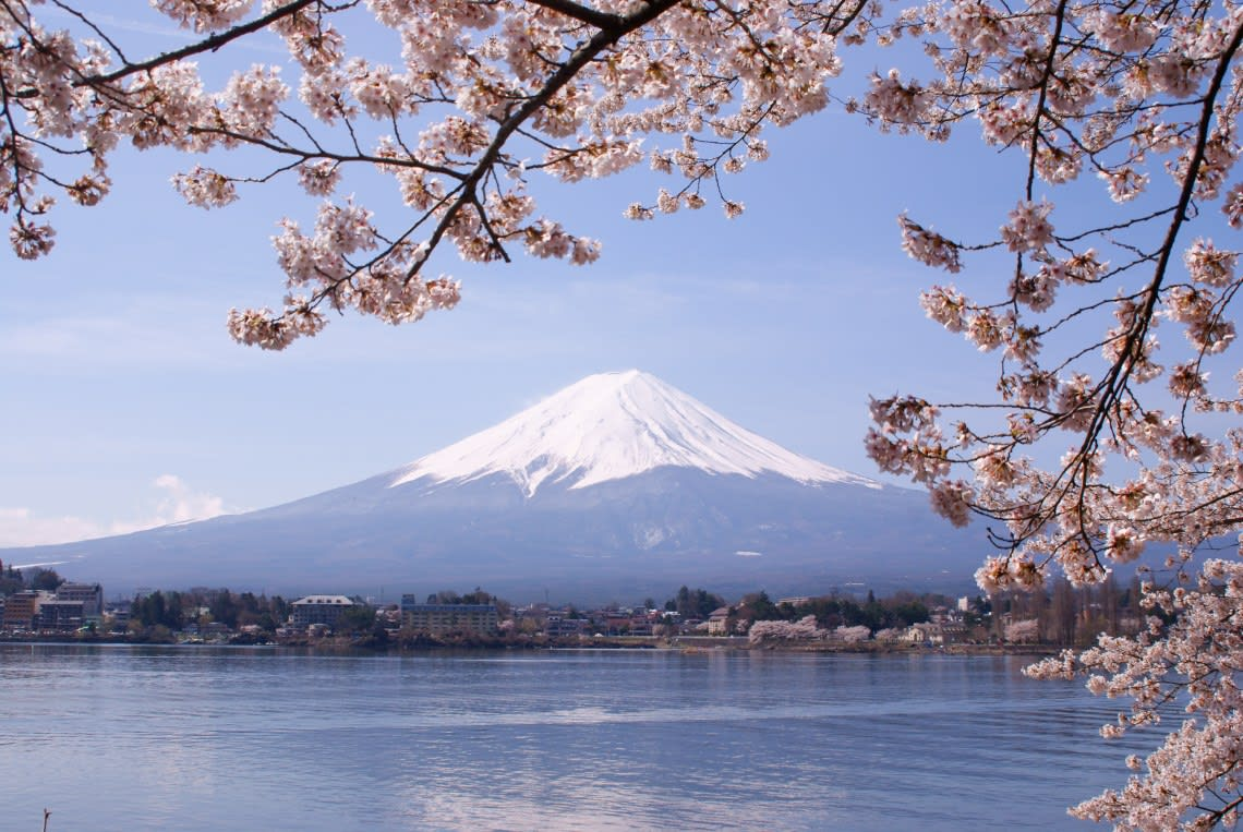 Mount Fuji in cherry blossom season