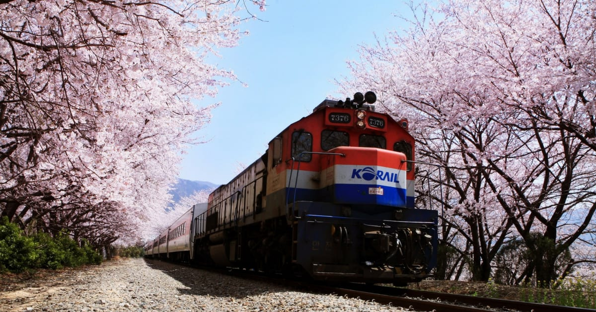 geonghwa rail station jinhae cherry blossom festival