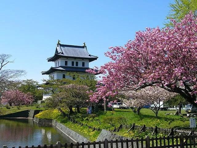 matsumae park hokkaido cherry blossom