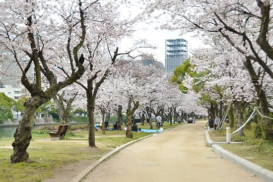 hiroshima peace park cherry blossom