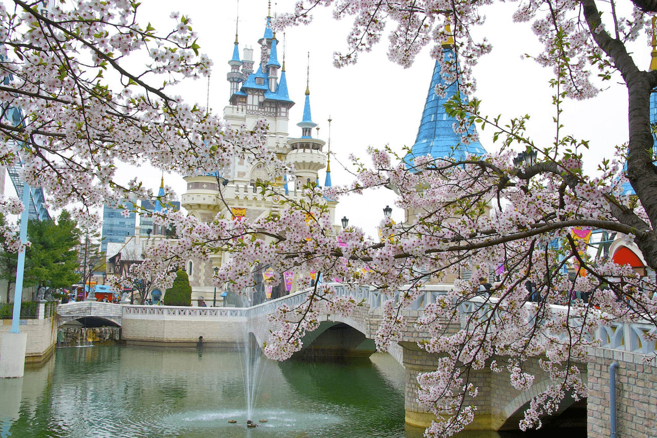lotte world cherry blossom