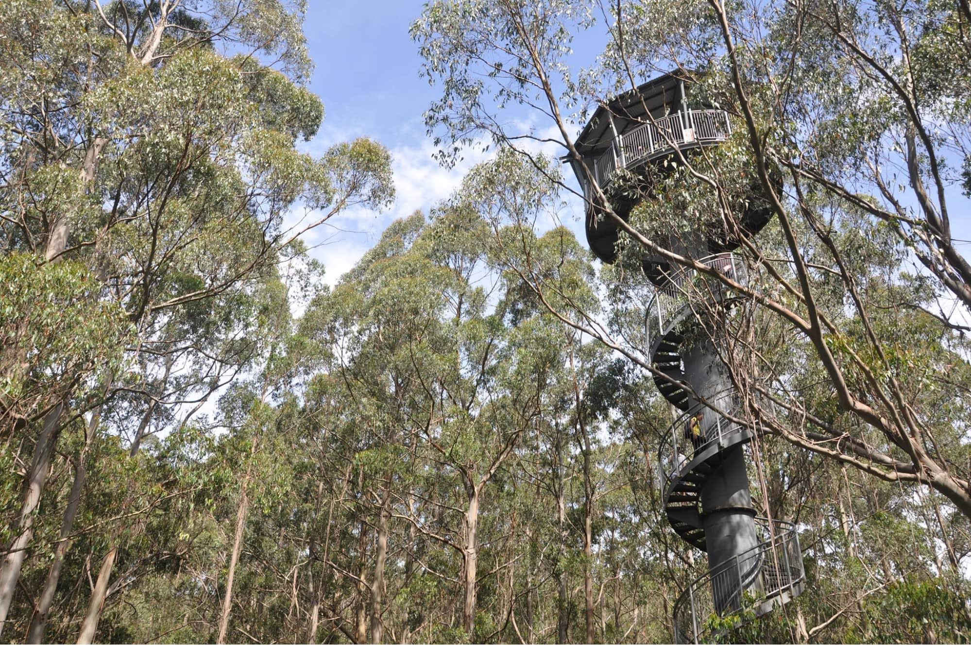 Otway Fly Treetop Adventure Melbourne Road Trips