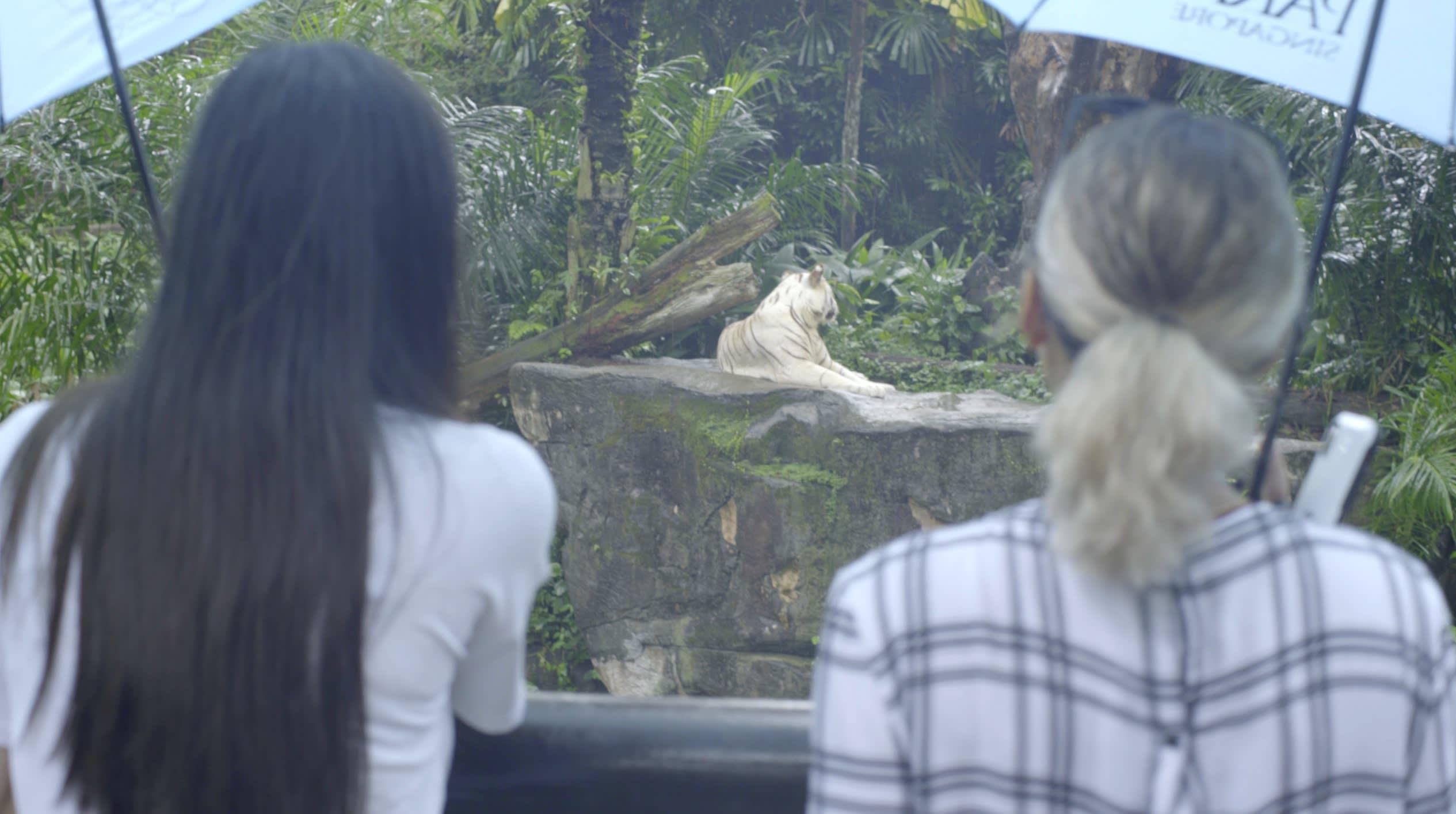 klook singapore gabbi garcia issa pressman singapore zoo