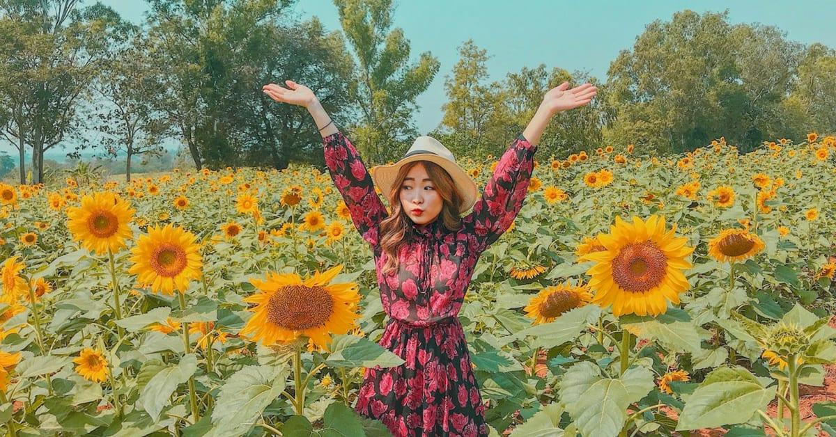 jessica chaw khao yai sunflower field