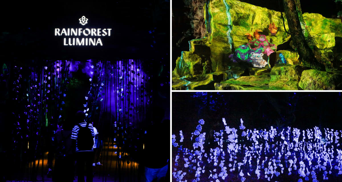 Rainforest Lumina Singapore Zoo