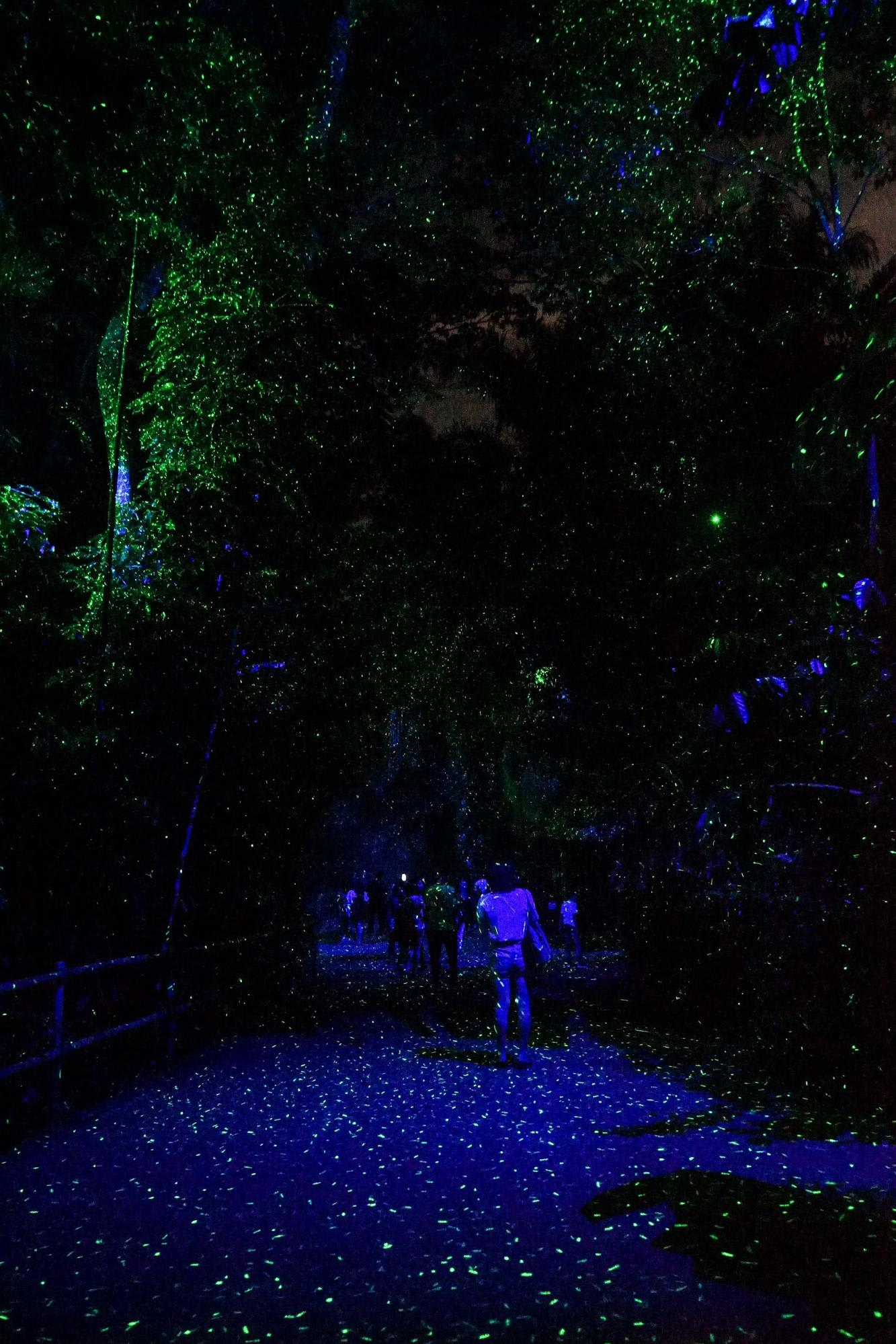 Rainforest Lumina Luminous Pathway Singapore Zoo