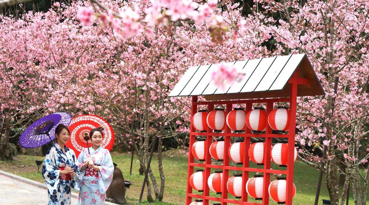 Sun Moon Lake cherry blossoms