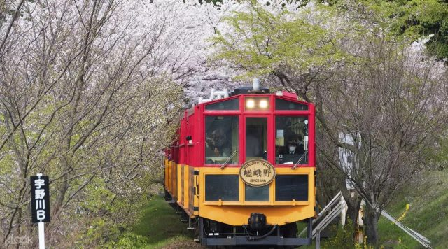 sagano romantic train cherry blossom