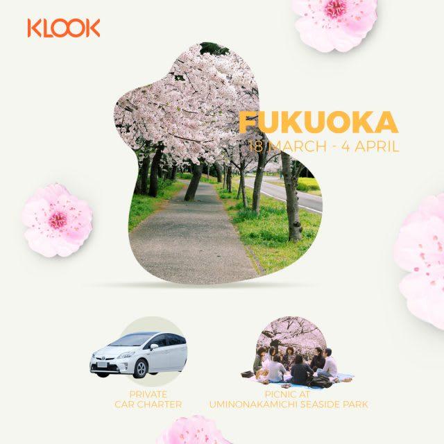 fukuoka cherry blossom forecast 2019