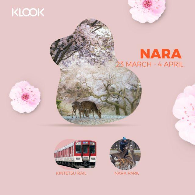 nara cherry blossom forecast 2019