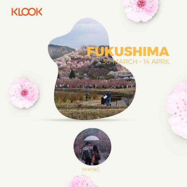 fukushima cherry blossom forecast 2019