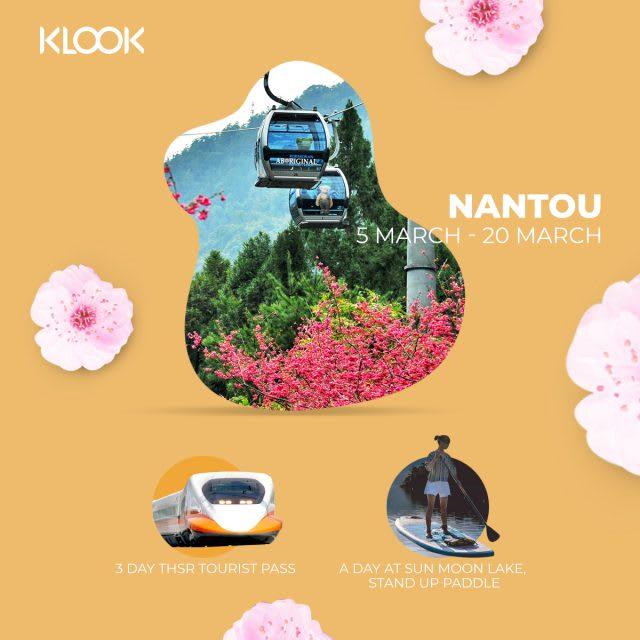 nantou cherry blossom