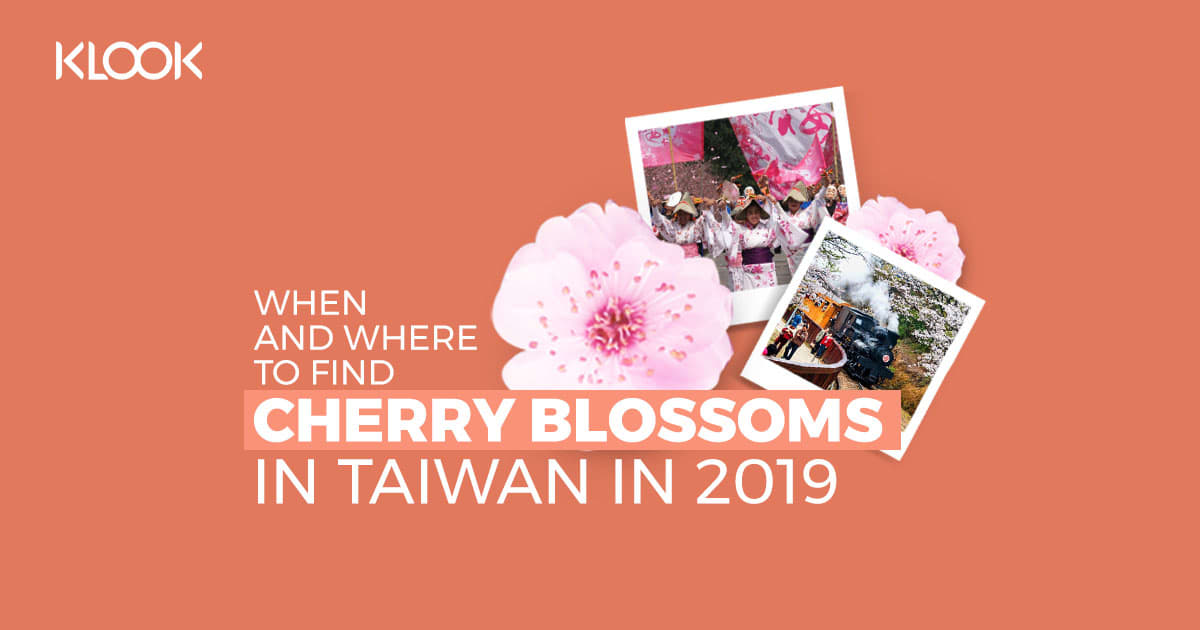cherry blossoms taiwan