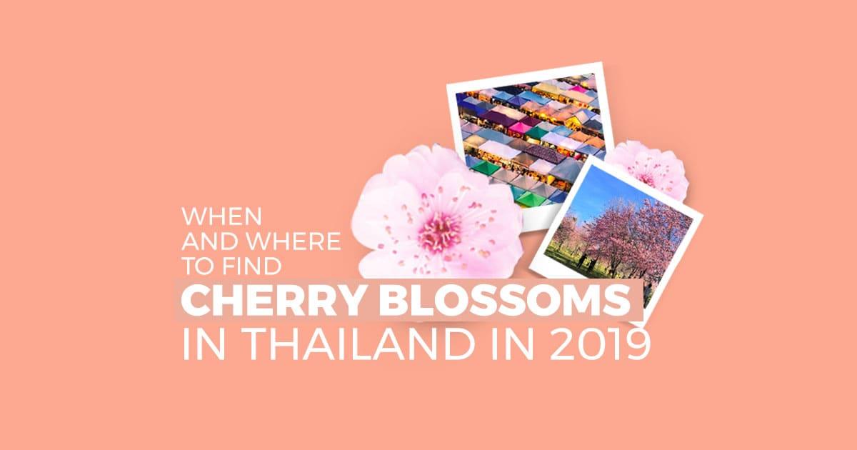 Thailand Cherry Blossom cover image