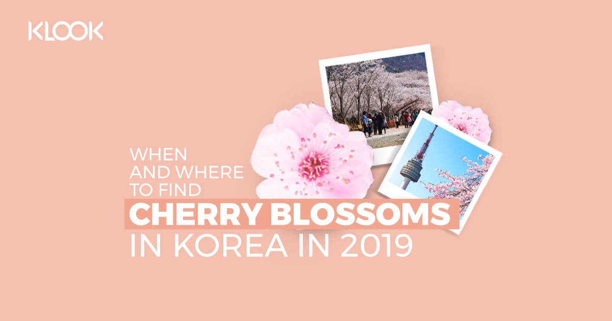 Korea's 2019 Cherry Blossom Forecast And The Best Viewing
