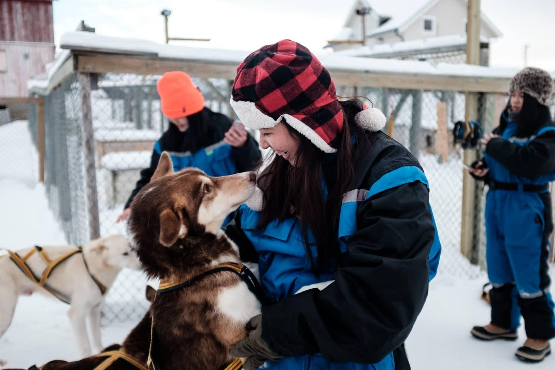 Huskies in Tromso Norway