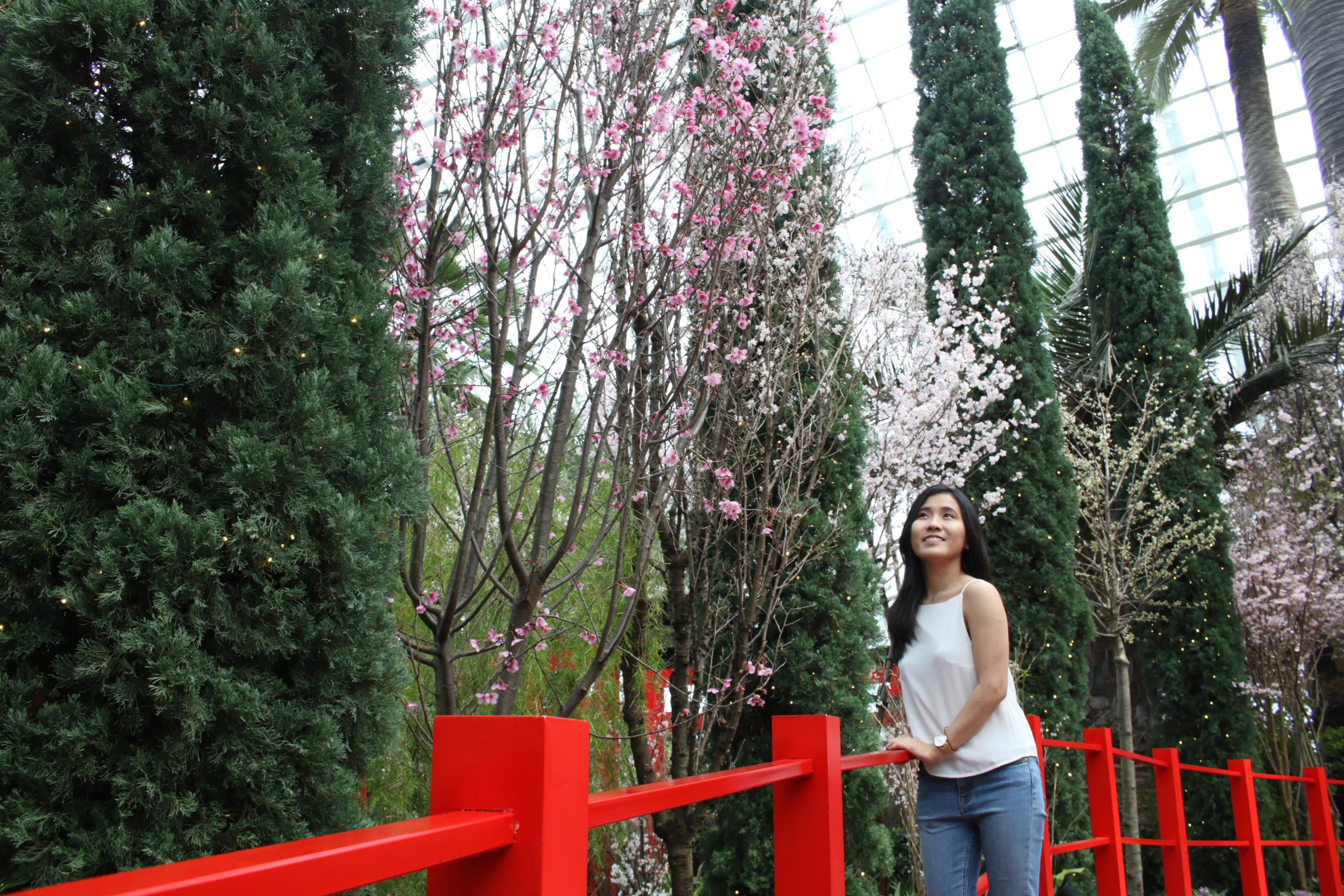 Sakura Matsuri GBTB Red Bridge