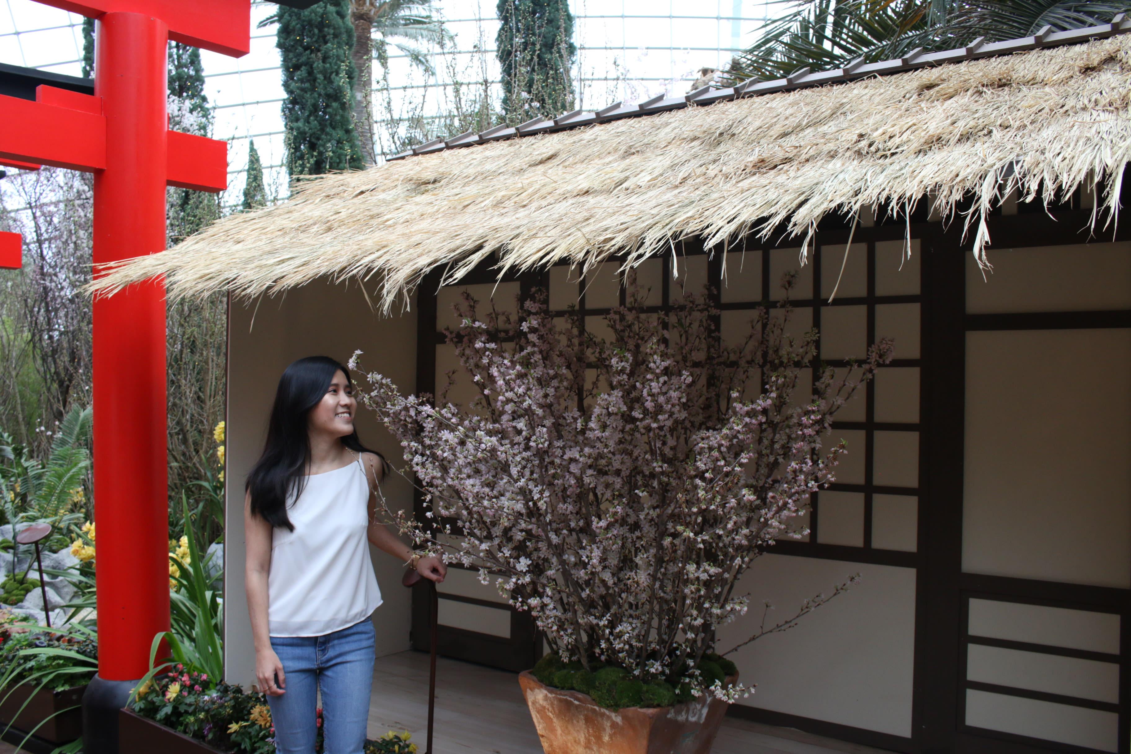 Sakura Matsuri GBTB Tea Ceremony Hut