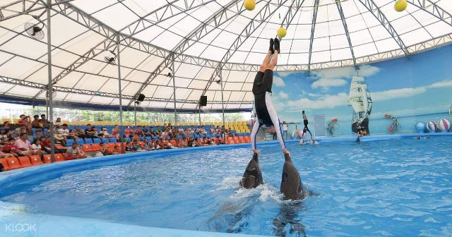 Top things to do in Phuket - PhuketDolphinShowTicket