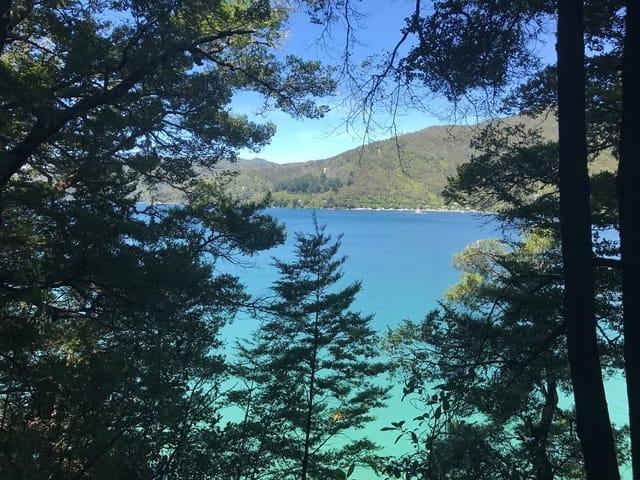 Sounds Marlborough Water Sea Trees