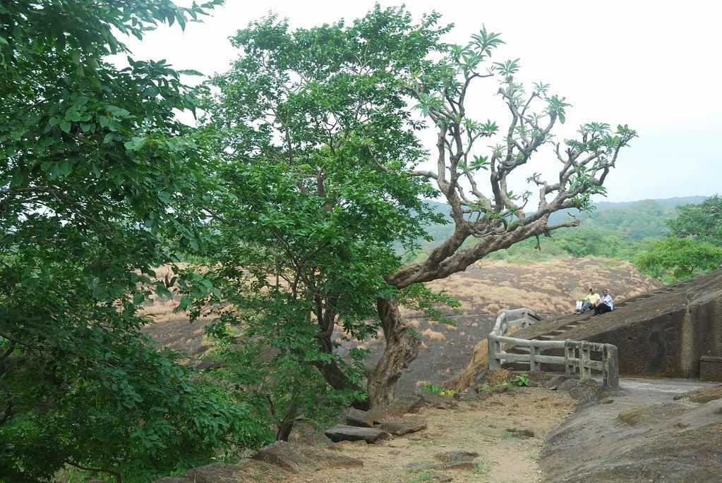 Cardio at Sanjay Gandhi National Park