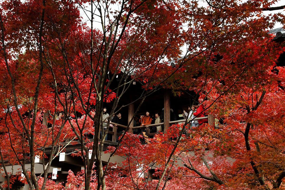 september-monthly-roundup-tofuku-ji-temple-autumn