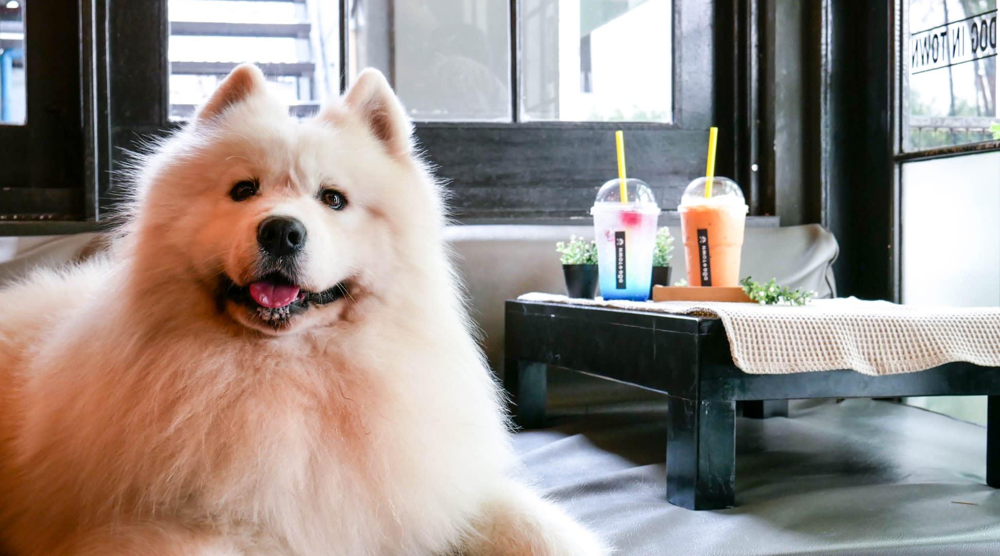 bangkok-BTS-guide-dog-in-town