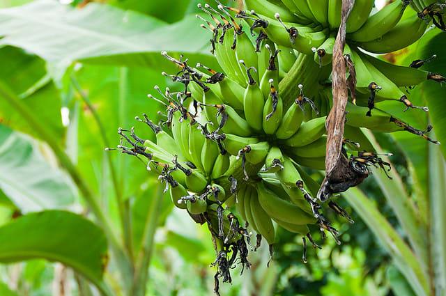 desaru-family-guide-fruit-farm