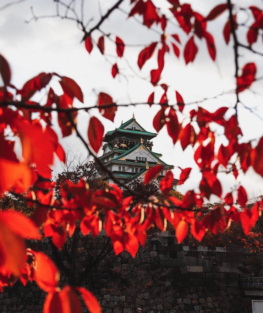 autumn-japan-1
