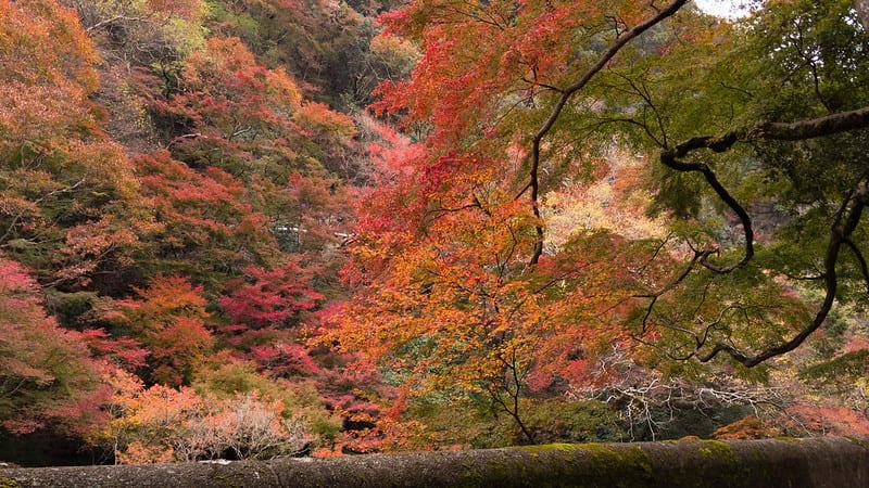 japan-autumn-1