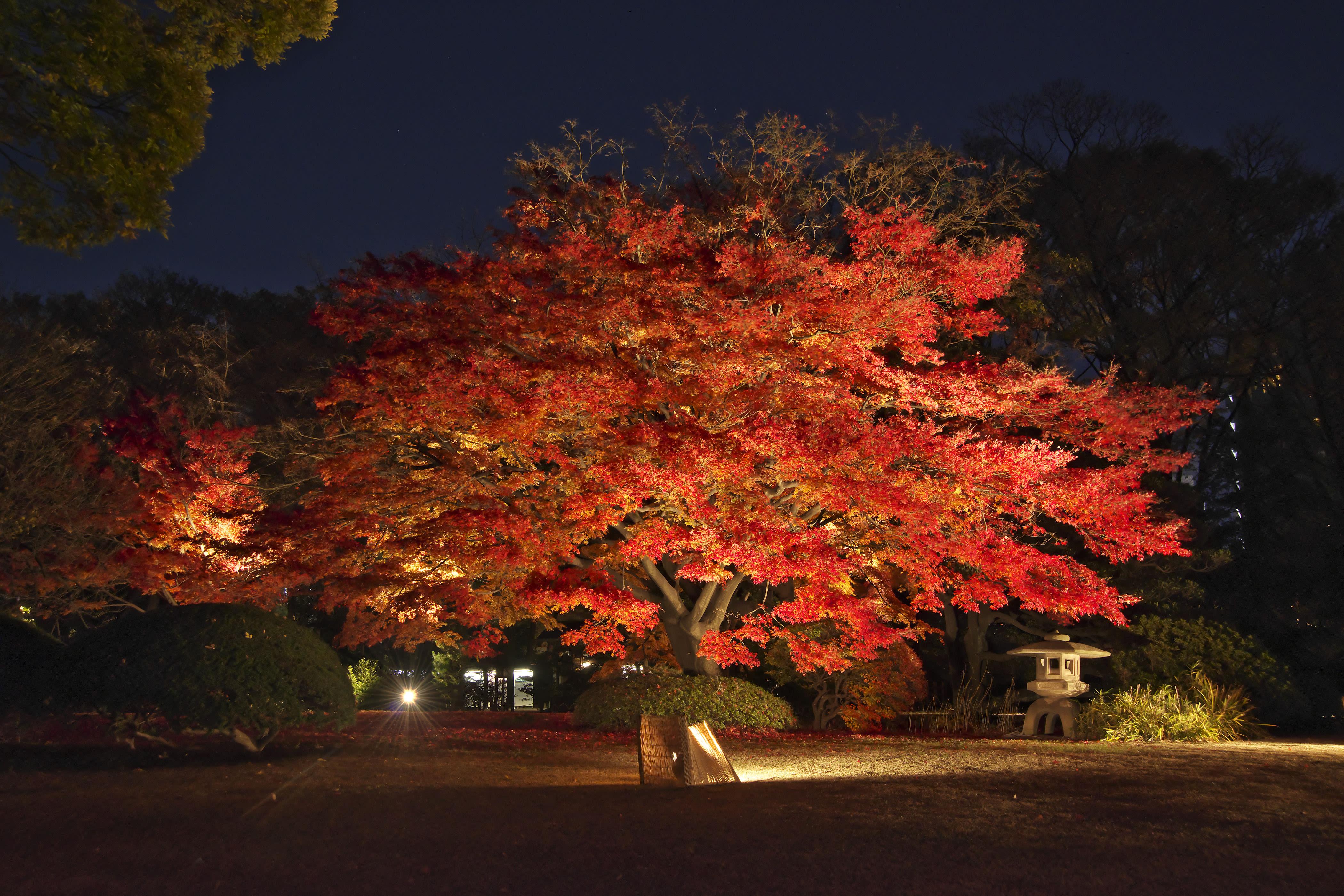 japan-autumn-rikugien