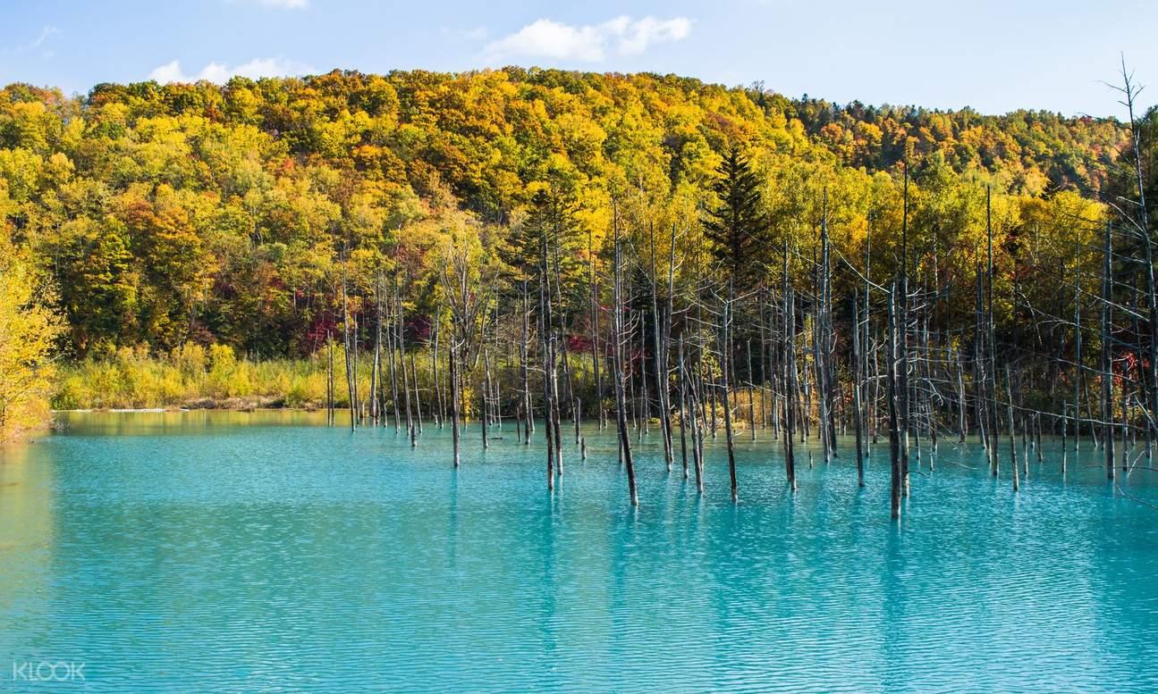 japan-autumn-blue-pond