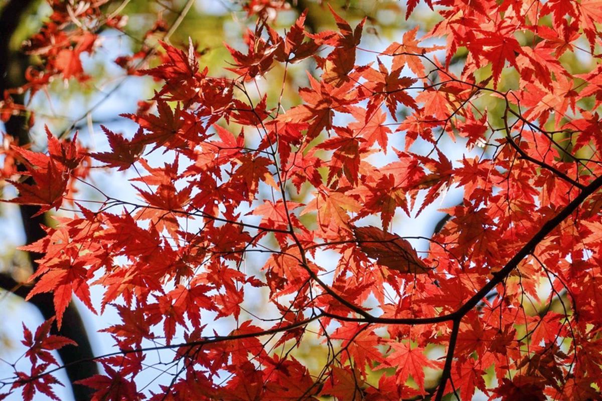 japan-autumn-watarase-railway