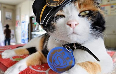 day-trips-from-osaka-cat-stationmaster