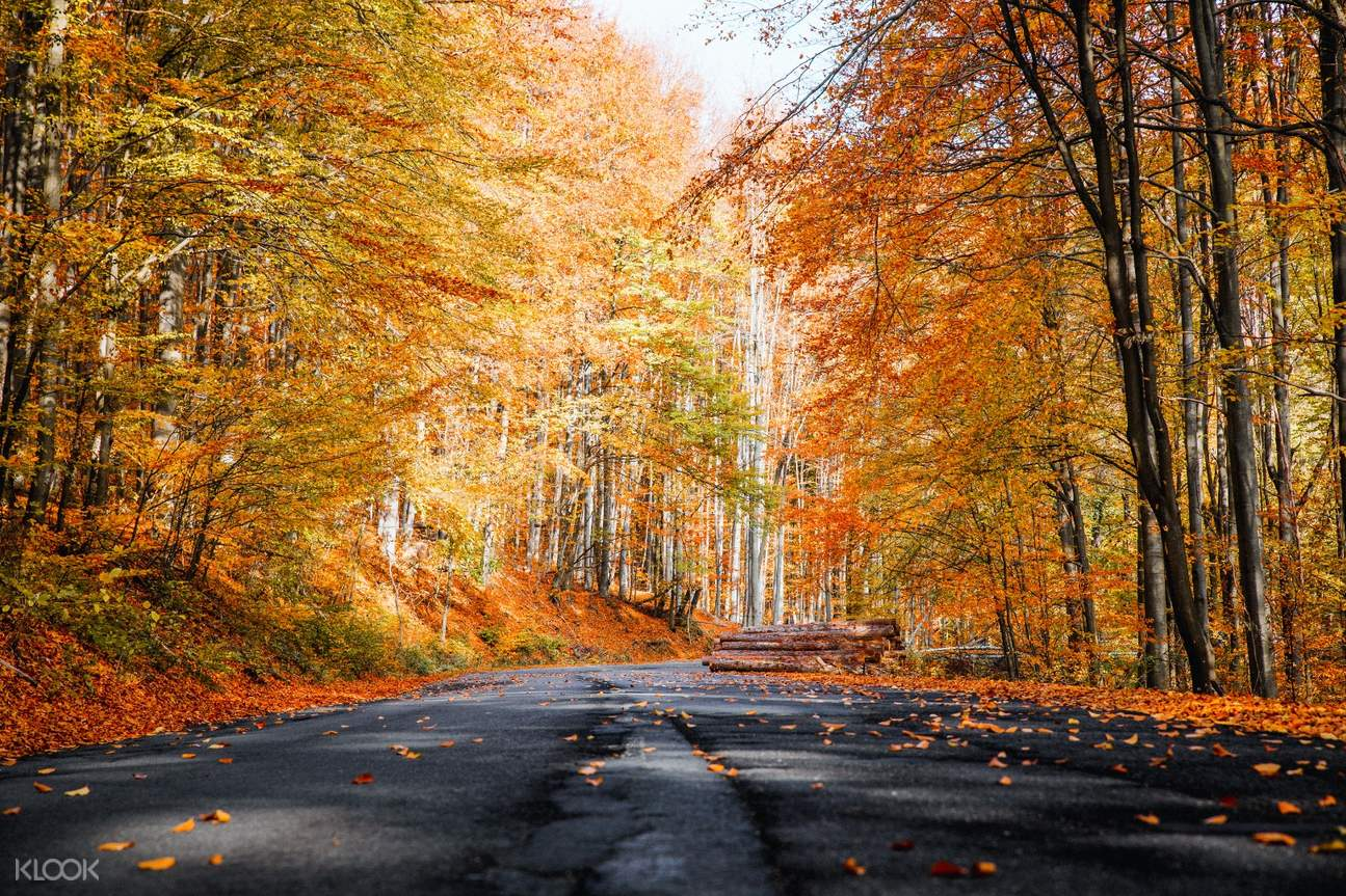 kto-jeju-autumn