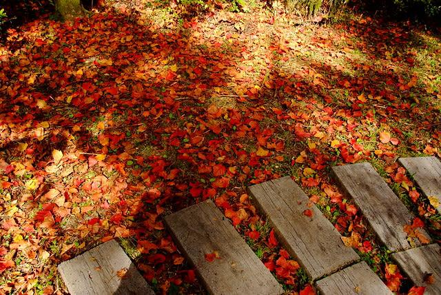 taiwan-autumn-dayueshan