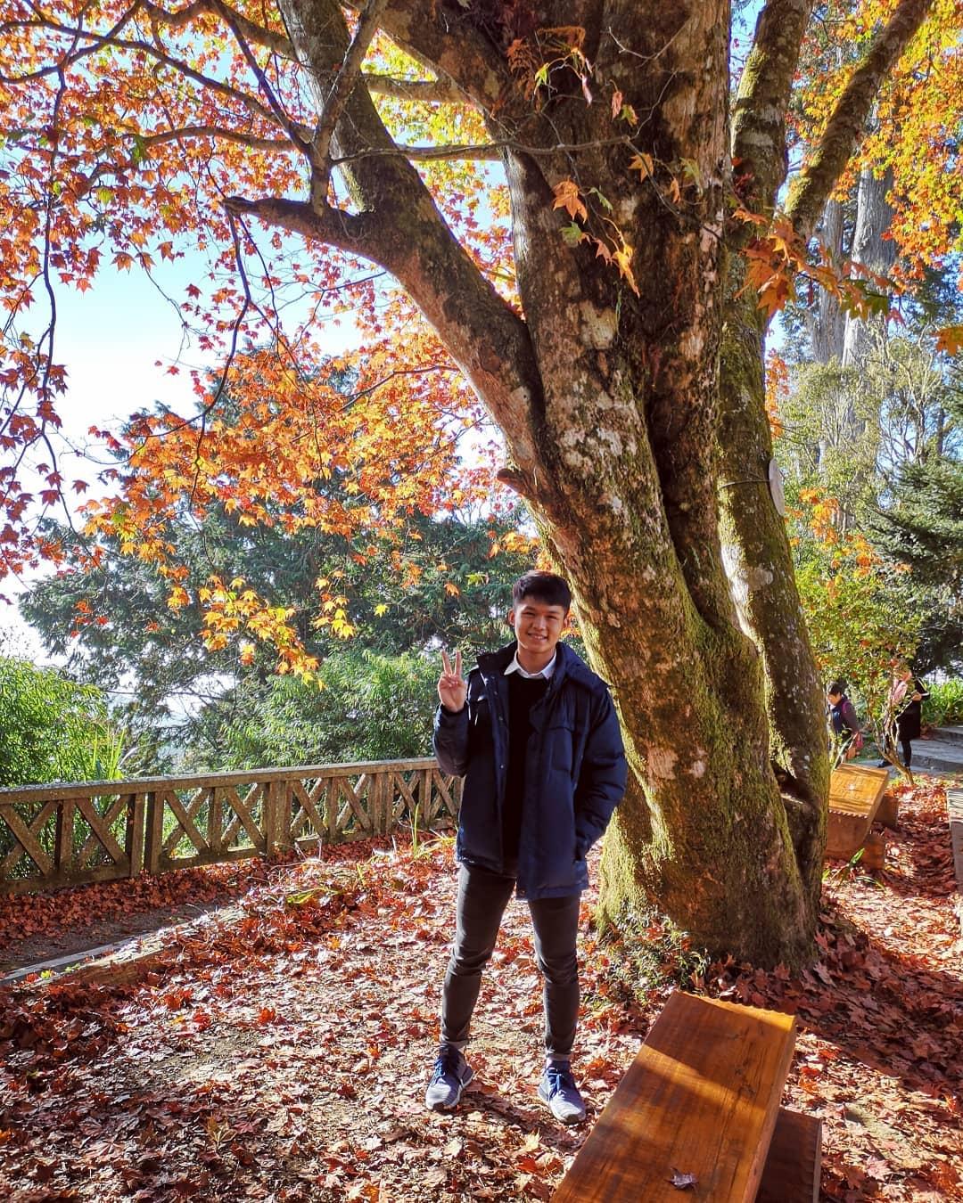 taiwan-autumn-alishan