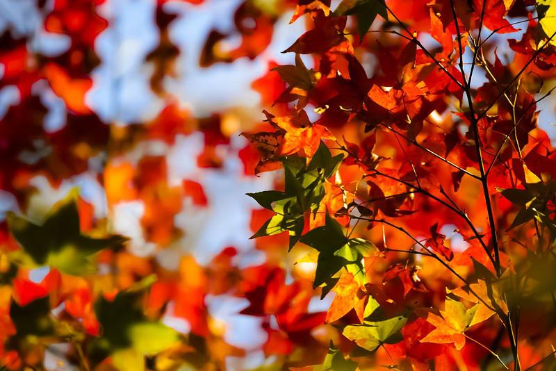 taiwan-autumn-yangmingshan