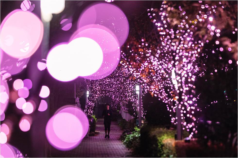 tokyo-illumination-megurigawa